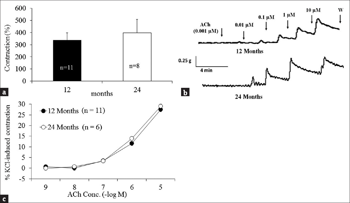 Figure 1: Effects of age on KCl- and acetylcholine-induced contraction. The KCl (70 mM)-induced maximal contraction in 12- and 24-month mice were not significantly different (<i>n</i> = 11-8, <i>P</i> > 0.05, a). A representative tracing shows acetylcholine (acetylcholine, 0.001–10 μM)-induced contraction in 12-month (upper panel, b), and 24-month (lower panel, b) mice, in urothelium intact urinary bladder in the absence of active muscle tone. This constriction was not different between 12- and 24-month bladder strips (<i>n</i> = 11 ~ 6, <i>P</i> > 0.05, c). Values are mean ± standard error mean, <i>n</i> = number of experiments. W: Wash